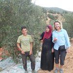 Stopped to help this family harvest olives and of course were invited for tea | Photo taken by fern k