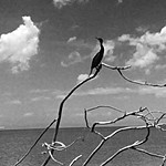 Bird life on Lake Nicaragua | Photo taken by Hugh B