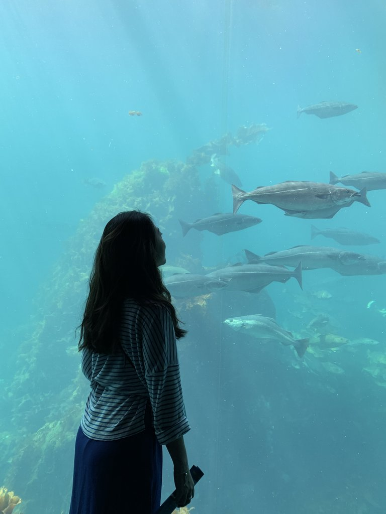 Ålesund Aquarium  | Photo taken by Jessica H