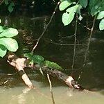 Jesus Christ Lizard  | Photo taken by Rachel H