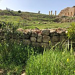 Ruins (and wildflowers) in Jerash | Photo taken by Jennifer K