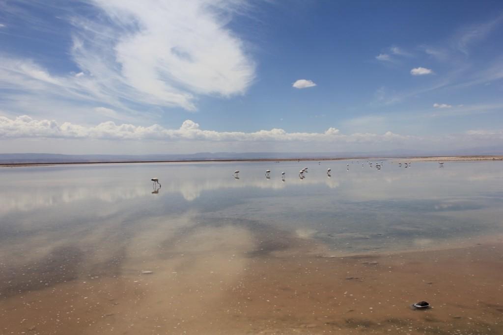 Salt flats, Atacama  | Photo taken by Sheila S