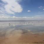 Salt flats, Atacama  | Photo taken by Sheila S