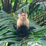 Monkeys in Cano Negro | Photo taken by Rachel H
