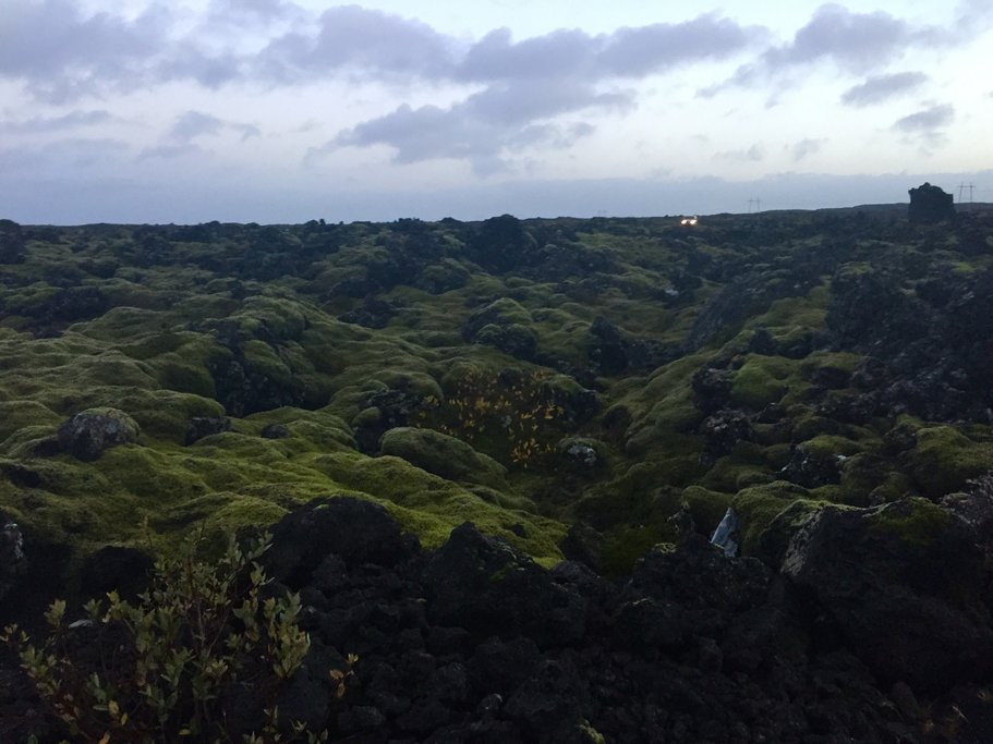 Walk from the Silica Hotel to the Blue Lagoon. Volcanic rock covered in moss | Photo taken by Marisa K