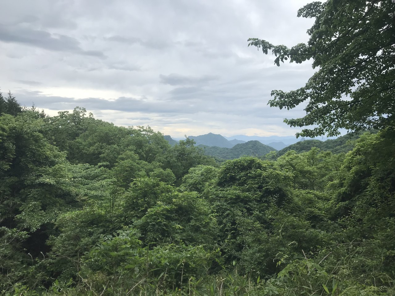 Forest near Yokokawa   Photo taken by Pui san C