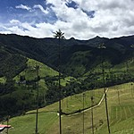 Wax Palms - Cocora Valley | Photo taken by David B