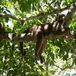 Misahaulli & the monkeys | Photo taken by Katrina H