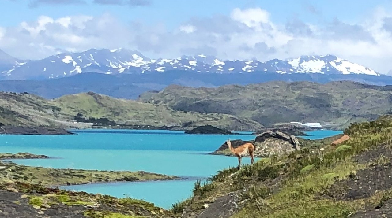 Lone Guanaco taking in the view | Photo taken by Melody B