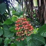 La Flor  | Photo taken by Rachel H