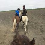 Icelandic horse | Photo taken by Anette U