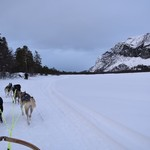 more dog sledding | Photo taken by Cyndi P