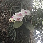 orchid | Photo taken by Janice B