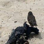 Godzilla is down! | Photo taken by Mylinda D