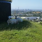 Sheep jokes aside...we have the best dining table!  One Tree Hill, Auckland | Photo taken by Clare F