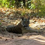 Bandhavgarh | Photo taken by Ronnie B