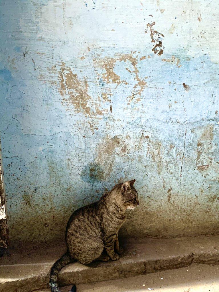 Fès cat | Photo taken by Rod K