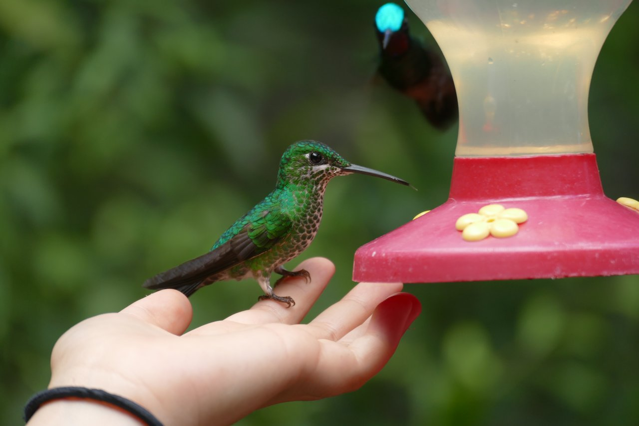 Hummingbird Garden | Photo taken by Laura M
