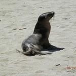 Sea lions in Galapagos | Photo taken by Katrina H
