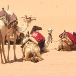 Camel ride at Wadi Rum | Photo taken by sheldon k