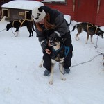 Dog sledding in Alta | Photo taken by Timothy H