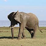 Menyara elephants | Photo taken by Jonathan G