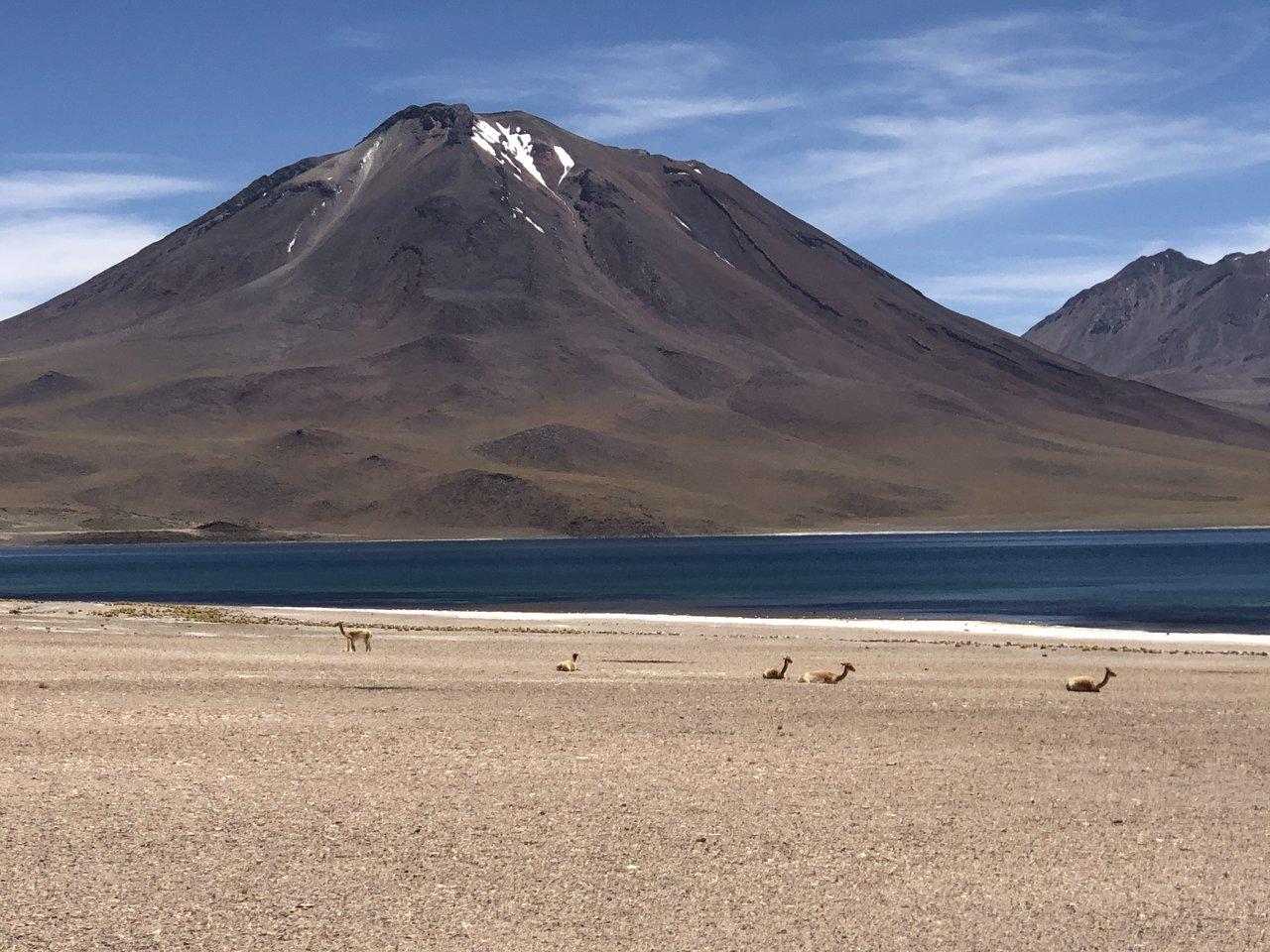 High Desert in Atacama Desert | Photo taken by Melody B