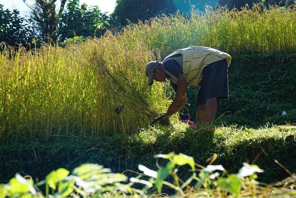 Rice farmer | Photo taken by Maria S