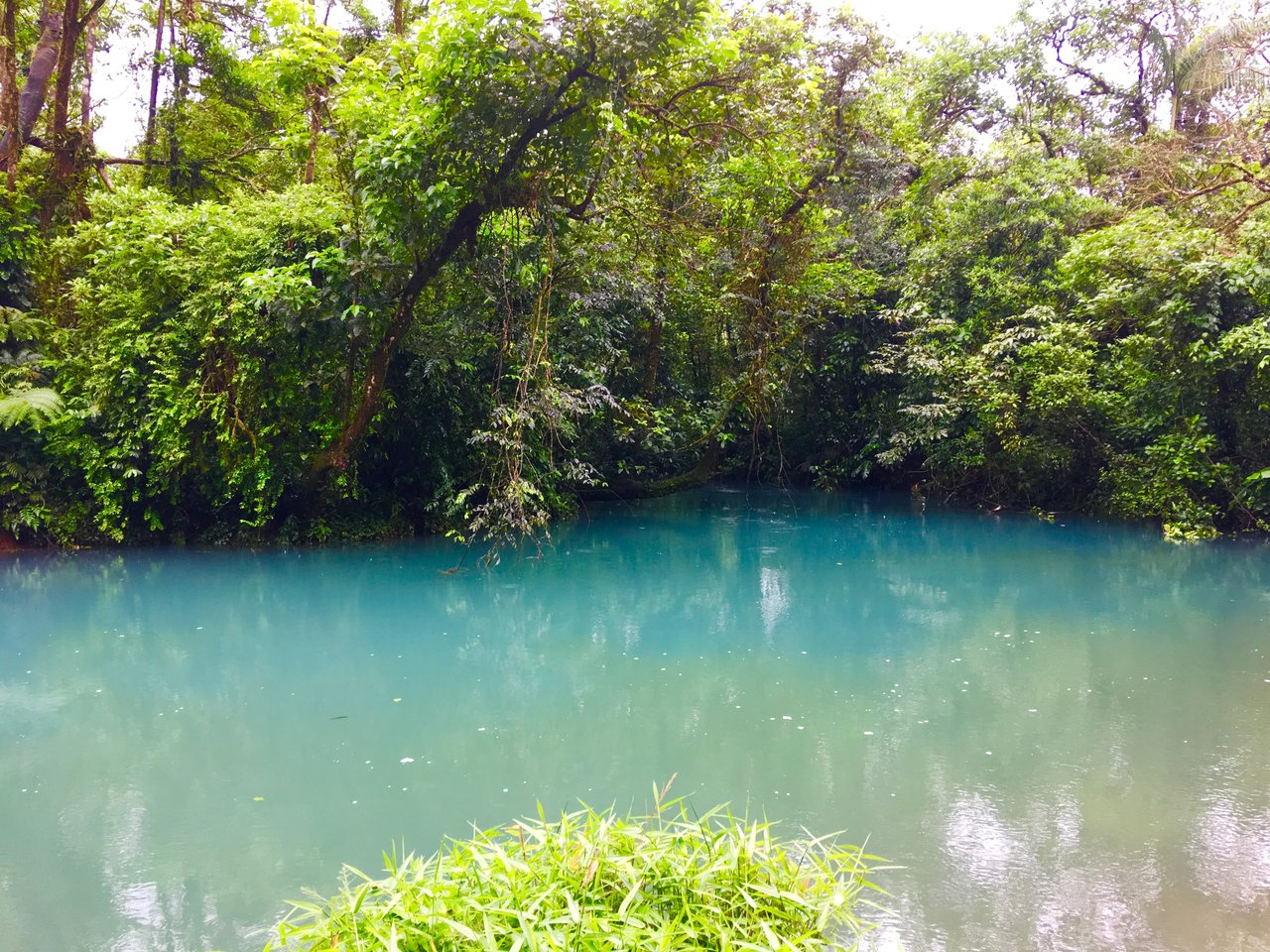 Rio Celeste-agua con gas  | Photo taken by Rachel H