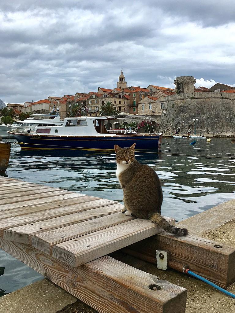 Korçula Cat | Photo taken by Andrés V