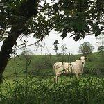 La vaca in La Carolina Lodge  | Photo taken by Rachel H