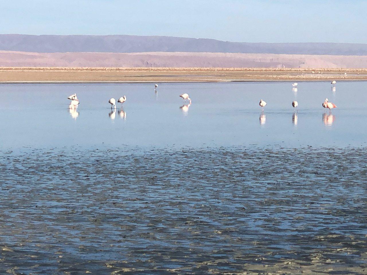 Flamingos at Salar de Atacama  | Photo taken by Melody B