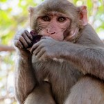 Monkey | Photo taken by Ronnie B