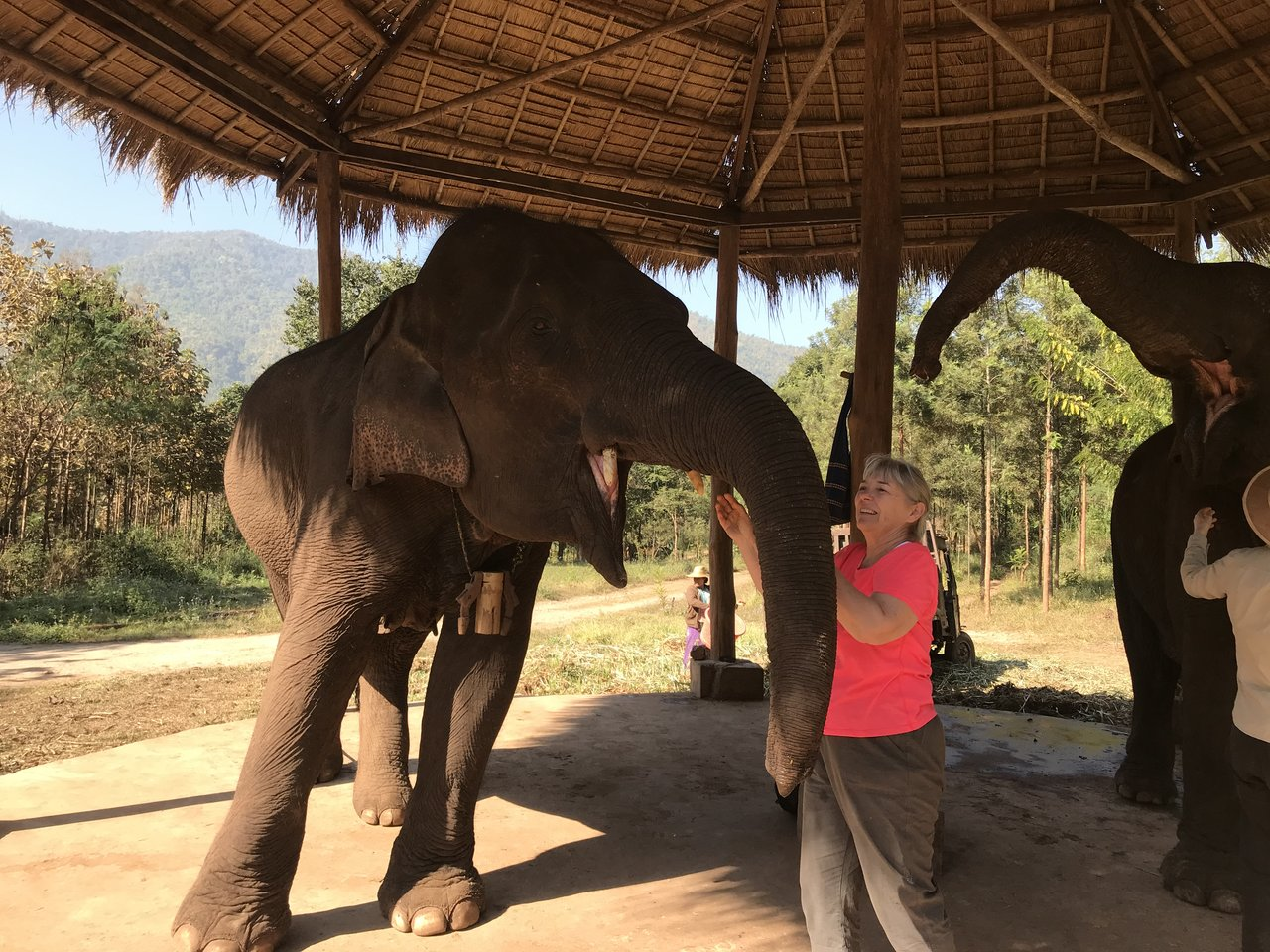 Meeting an elephant | Photo taken by Bonnie S