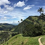 Cocora Valley | Photo taken by David B