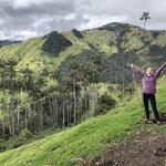 Wax Palms -- Salento | Photo taken by Rachel B