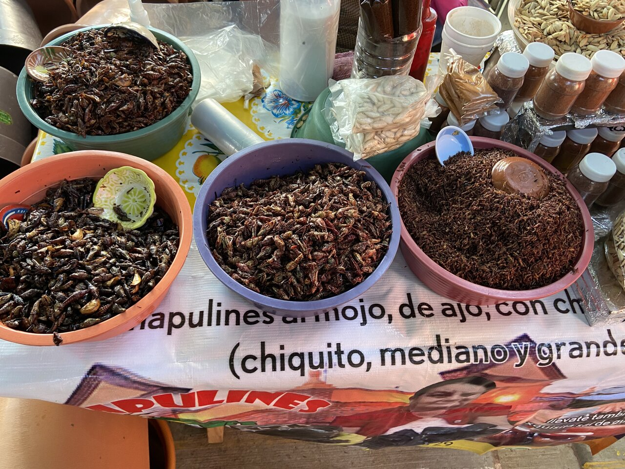 Grasshoppers at the market   Photo taken by Jazmin D