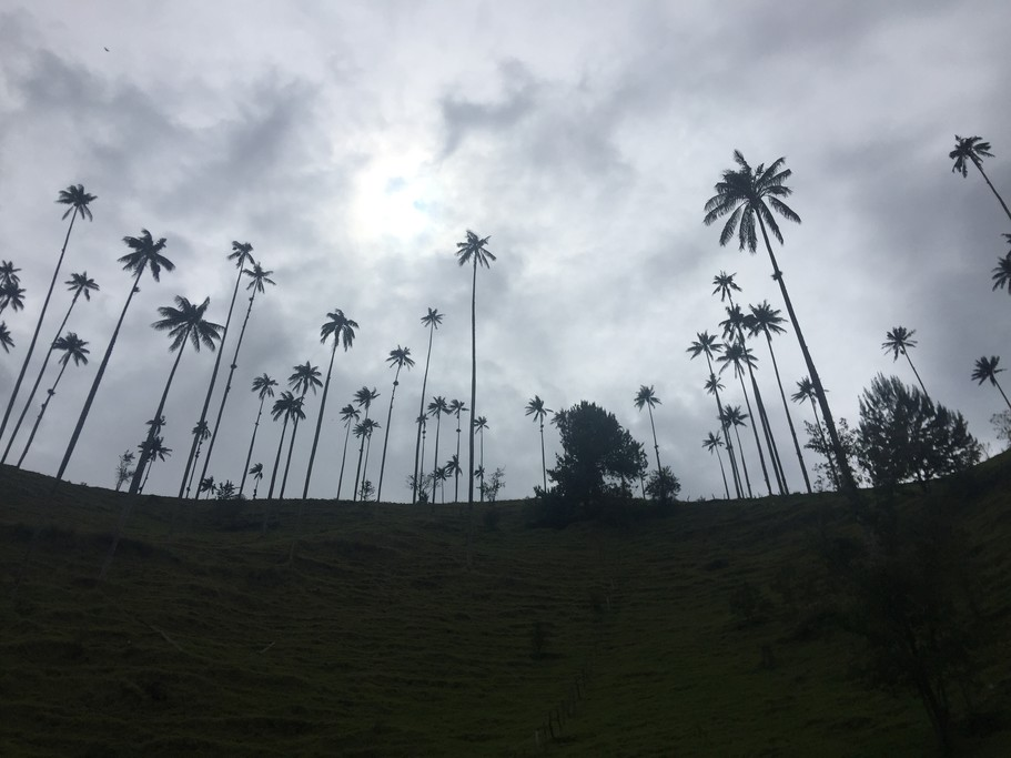 Cocora Valley | Photo taken by Ella W