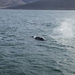 Whale watching. Up close and personal with a humpback whale.  | Photo taken by Whitney S