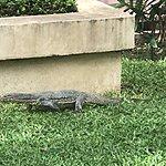 Asian water monitor lizard | Photo taken by Cynthia C