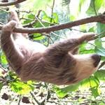 Sloth @ Jaguar rescue centre  | Photo taken by Federica M