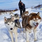 Husky sled ride | Photo taken by Ricther T
