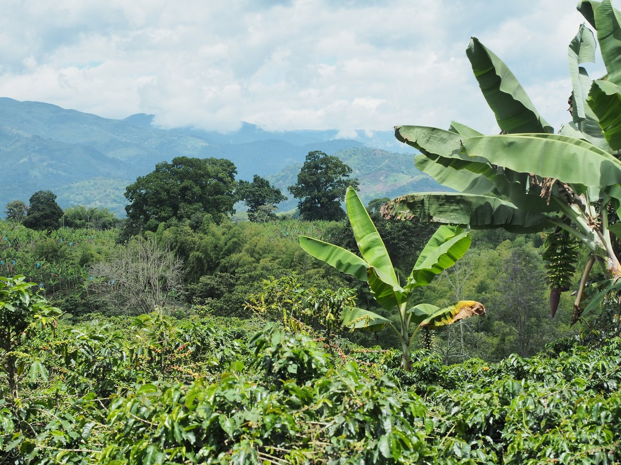 Inspiracion Coffee Hacienda | Photo taken by Peter G