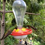 Acaime Hummingbird Reserve | Photo taken by Rebecca H