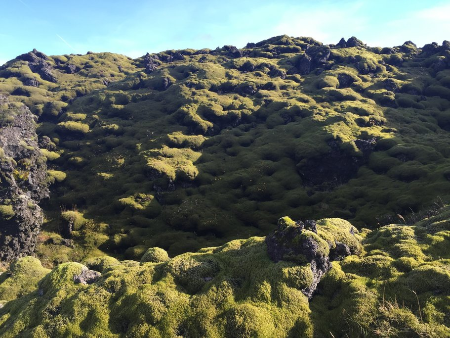 Moss covered valley  | Photo taken by Marisa K
