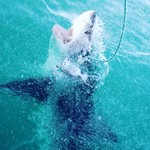Shark Cage Diving  | Photo taken by Missy G