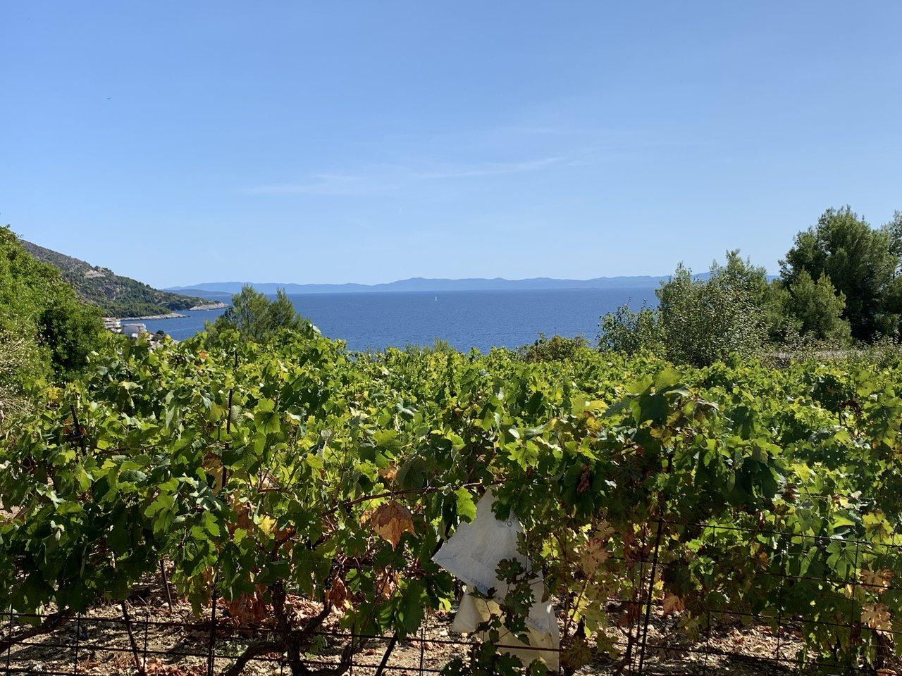 Vineyards along the Hvar coast | Photo taken by Eva W