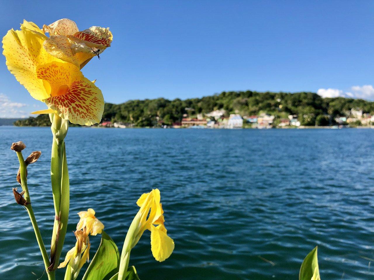 Flores | Photo taken by BRAD K