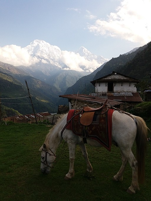 View of Annapourna south from Landruk. Ponytrekking is possible. | Photo taken by Monique L