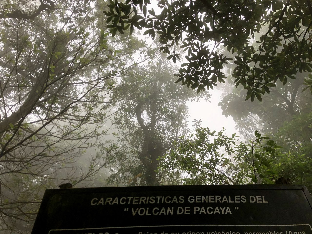 Fog on the way up Pacaya | Photo taken by BRAD K